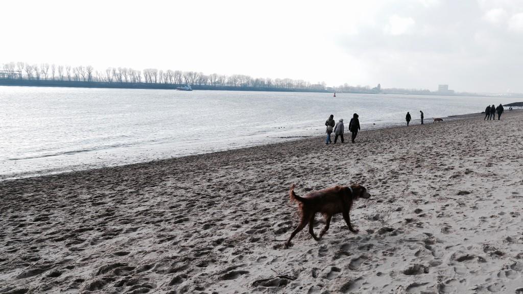 Setter an der Elbe