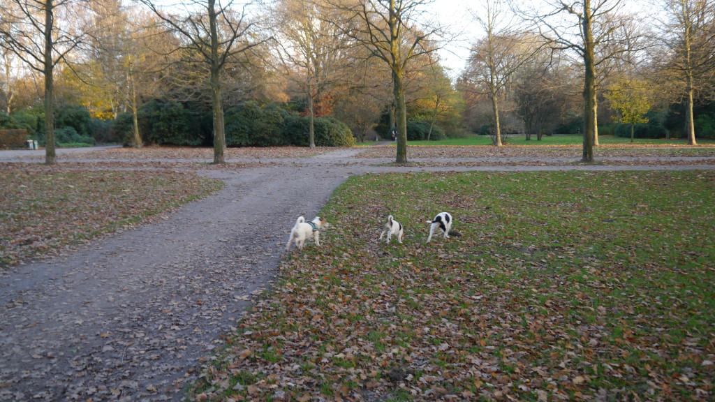 Hunde im Stadtpark