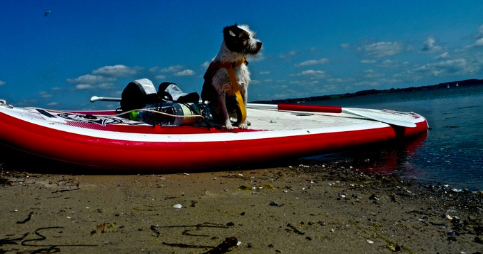 SUP mit Hund 2016