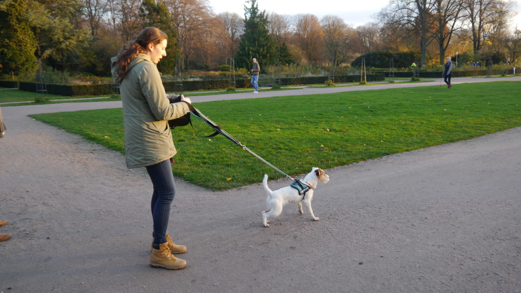 Achtsam unterwegs mit Hund