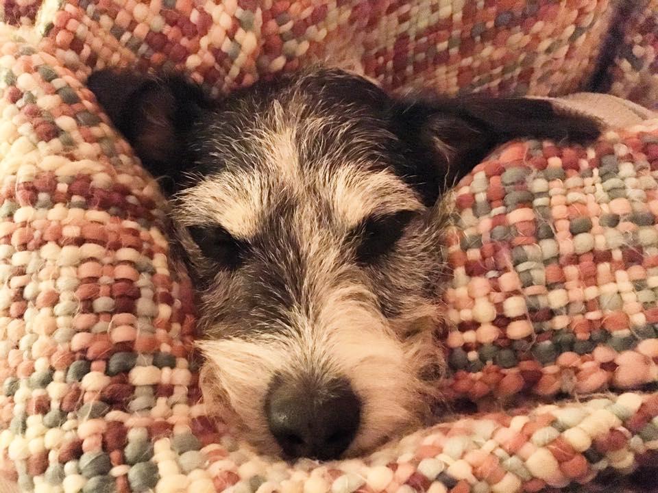 365 Tage Hund - Bild 1.500'