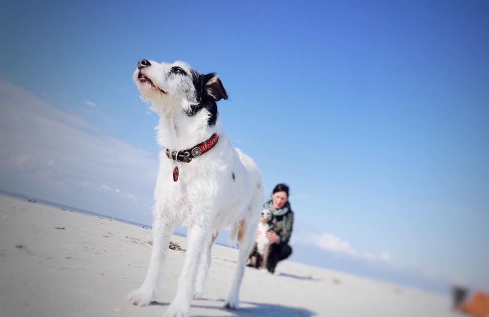Mein Hund Im Hier Und Jetzt Erste Wehwehchen Der Weisse Hund