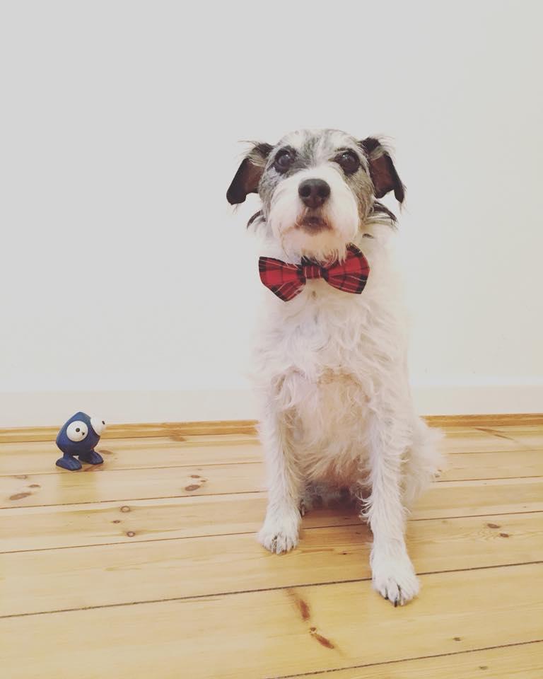 Ist mein Hund hochsensibel? | der weisse hund