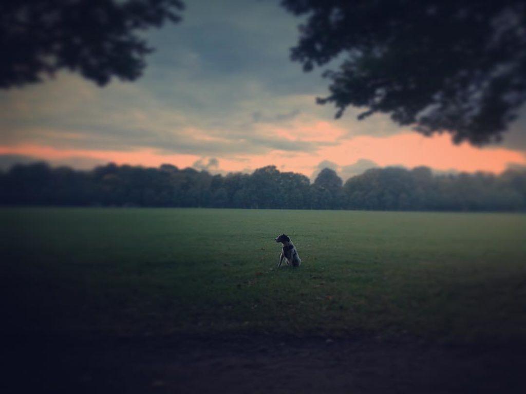 Ist ein Hund hochsensibel? | der weisse hund