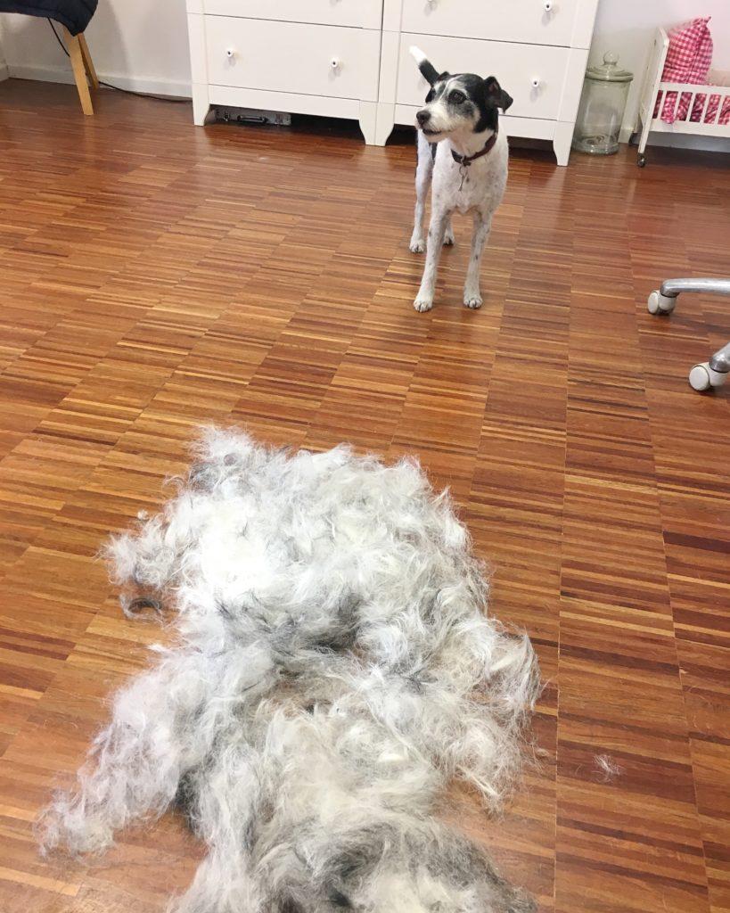 Trüffel's ... feines Handwerk im Hundesalon