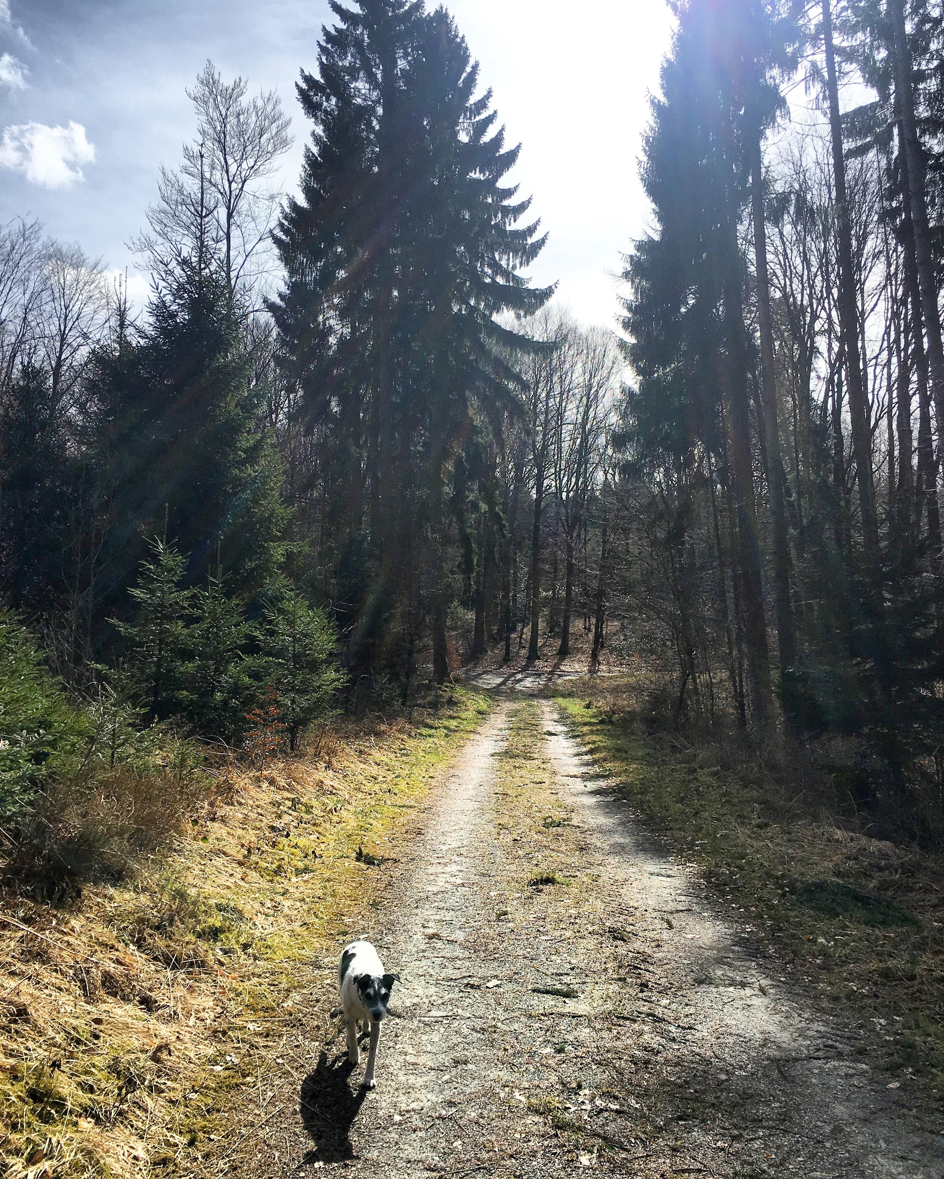 Unterwegs mit Einhörnern und Elfen | Der Waldmythenweg