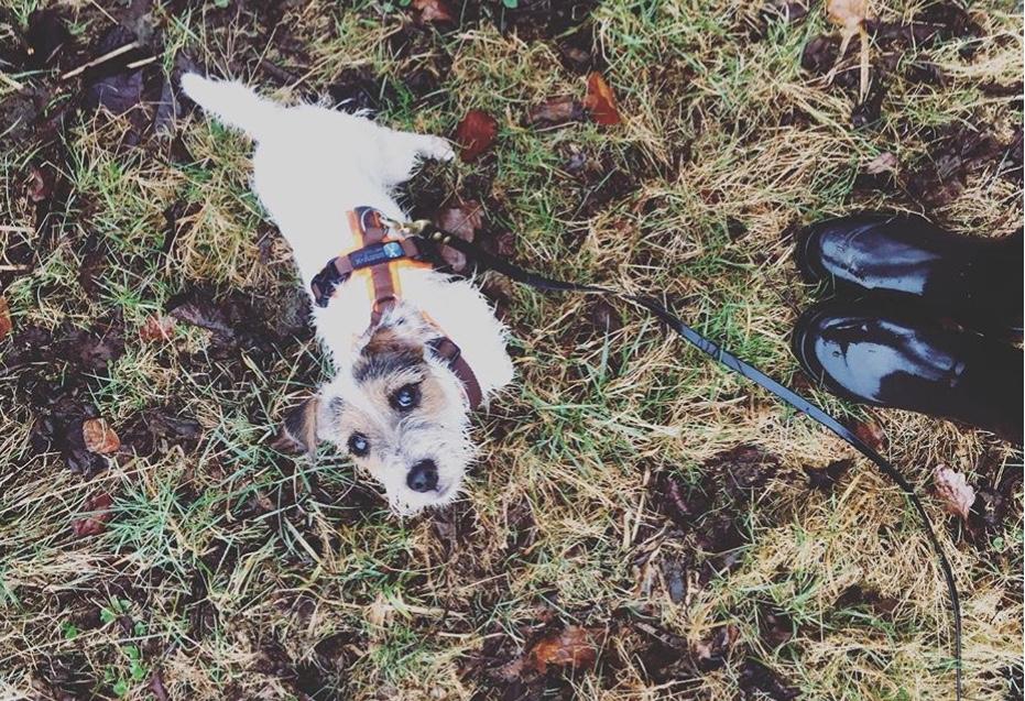 Mein Angebot |Feiner Führen | der weisse hund