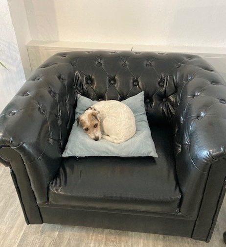 Pluspunkt Bürohund | der weisse hund
